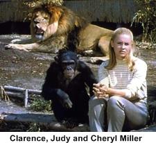 1960s animal show - Daktari