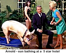 Arnold the pig- Green Acres