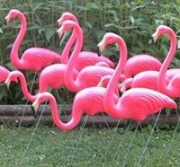 1950s Fads - Pink Flamingo